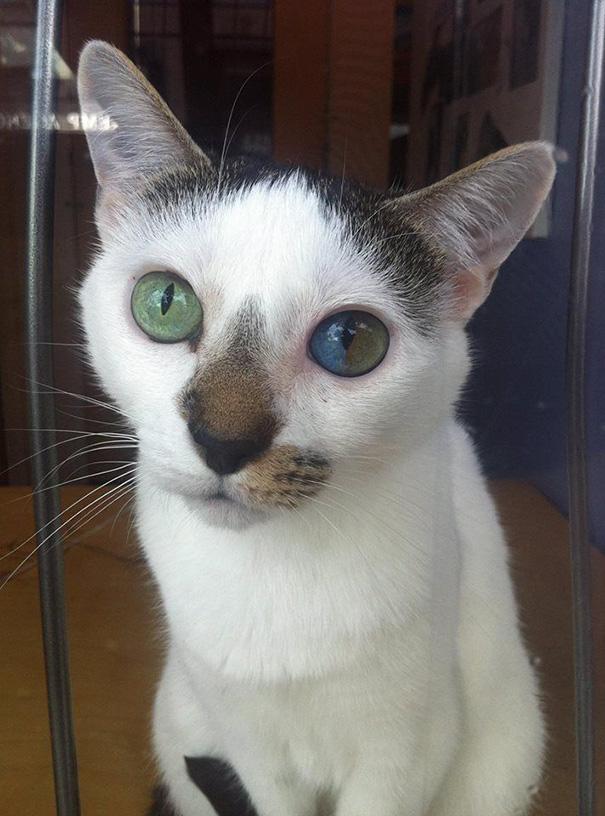 Як виглядають кішки із різнокольоровими очима  - фото 7