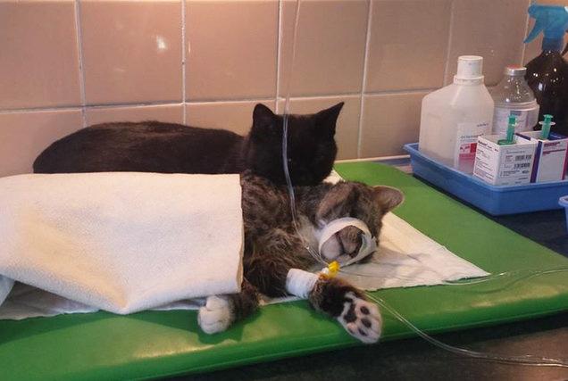 Кіт-фельдшер і кіт-музейник: ТОП-5 вусатих, які не сидять, склавши лапи - фото 8