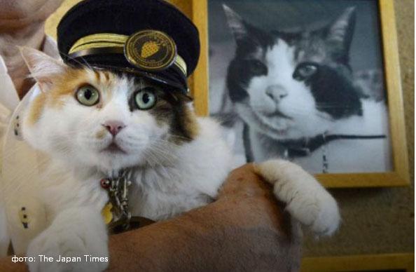 Кіт-фельдшер і кіт-музейник: ТОП-5 вусатих, які не сидять, склавши лапи - фото 6