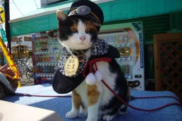 Кіт-фельдшер і кіт-музейник: ТОП-5 вусатих, які не сидять, склавши лапи - фото 5