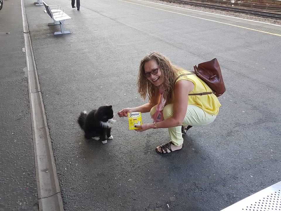 Кіт-фельдшер і кіт-музейник: ТОП-5 вусатих, які не сидять, склавши лапи - фото 13