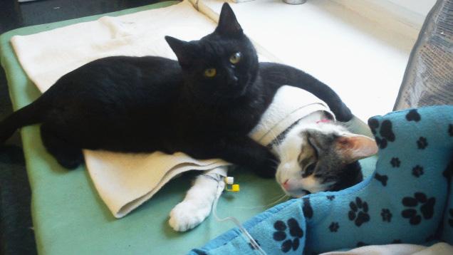 Кіт-фельдшер і кіт-музейник: ТОП-5 вусатих, які не сидять, склавши лапи - фото 9