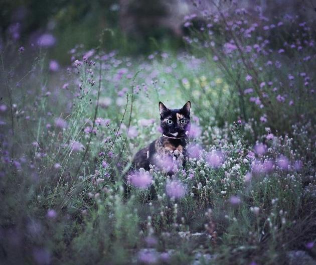 Кіт-фельдшер і кіт-музейник: ТОП-5 вусатих, які не сидять, склавши лапи - фото 4