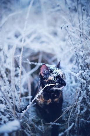 Кіт-фельдшер і кіт-музейник: ТОП-5 вусатих, які не сидять, склавши лапи - фото 2