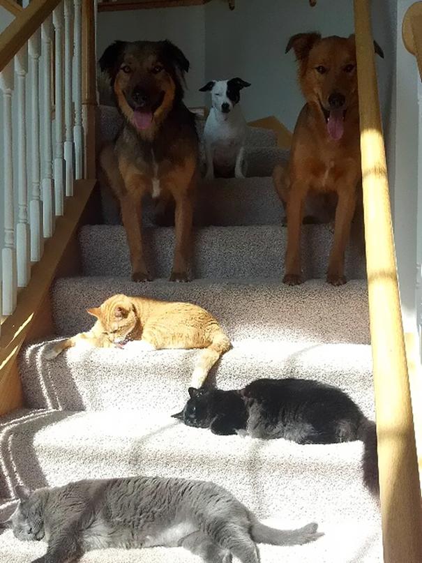 ТОП-10 котів, які обожнюють тепло більш за все  - фото 10