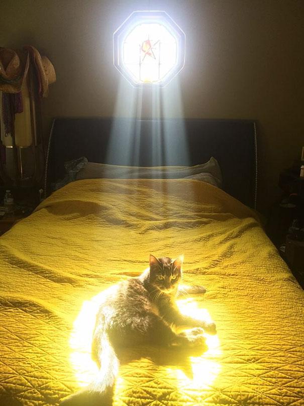 ТОП-10 котів, які обожнюють тепло більш за все  - фото 2