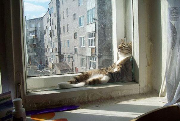 ТОП-10 котів, які обожнюють тепло більш за все  - фото 9