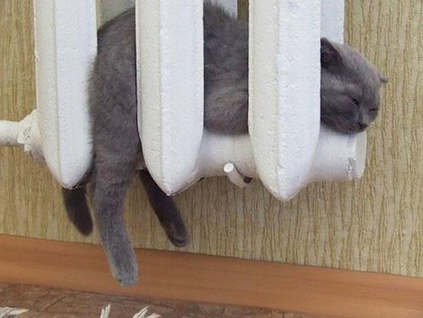 ТОП-10 котів, які обожнюють тепло більш за все  - фото 8