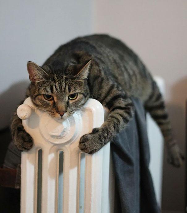ТОП-10 котів, які обожнюють тепло більш за все  - фото 7