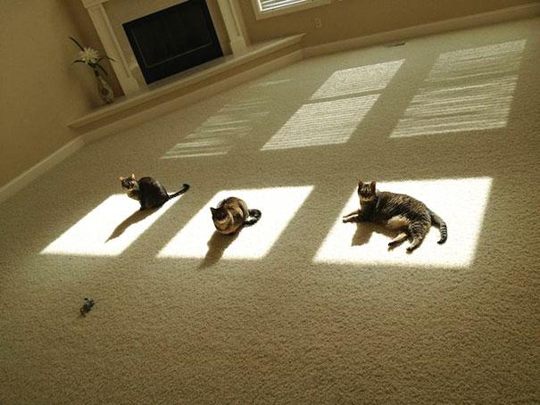 ТОП-10 котів, які обожнюють тепло більш за все  - фото 5