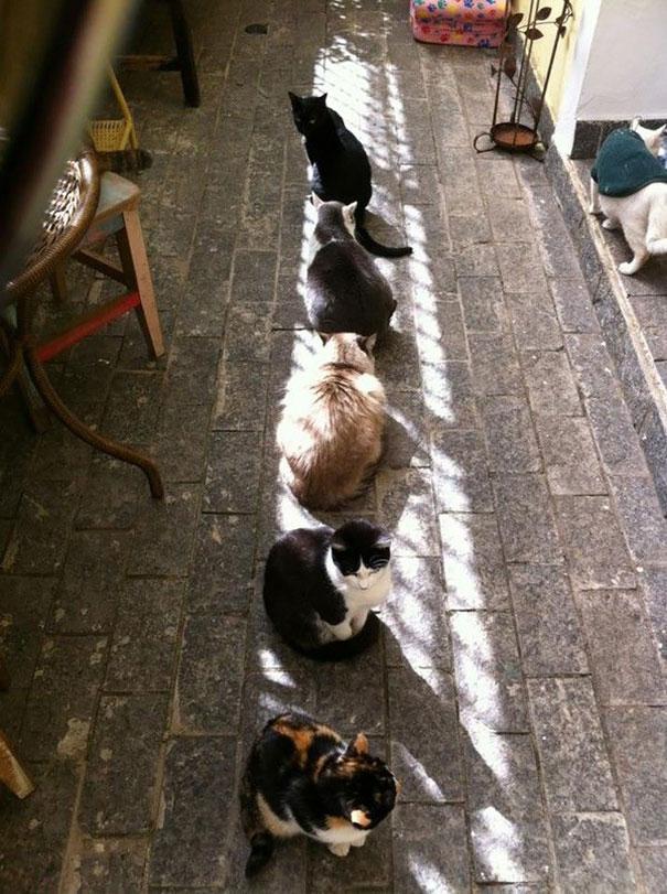 ТОП-10 котів, які обожнюють тепло більш за все  - фото 4
