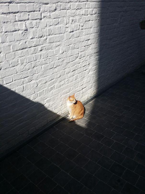 ТОП-10 котів, які обожнюють тепло більш за все  - фото 3