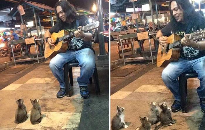 Як малайзійський гітарист давав концерт для крихітних кошенят - фото 1
