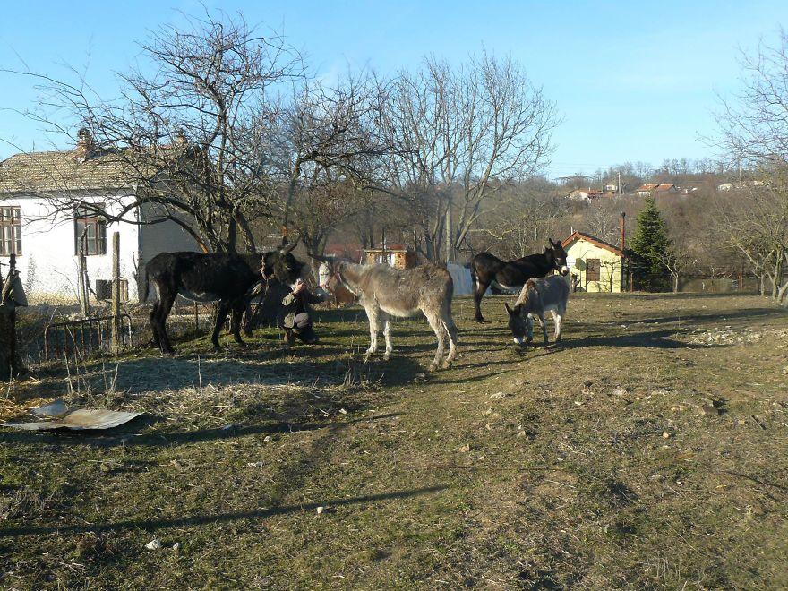 Різдвяне диво: як двох віслюків врятували від перетворення на ковбасу - фото 1