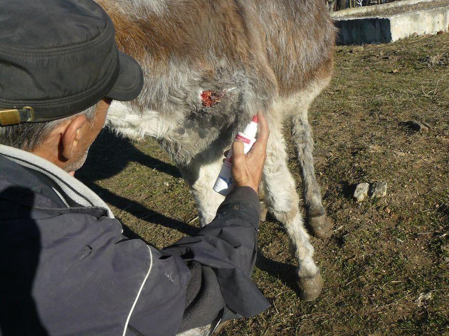 Різдвяне диво: як двох віслюків врятували від перетворення на ковбасу - фото 4