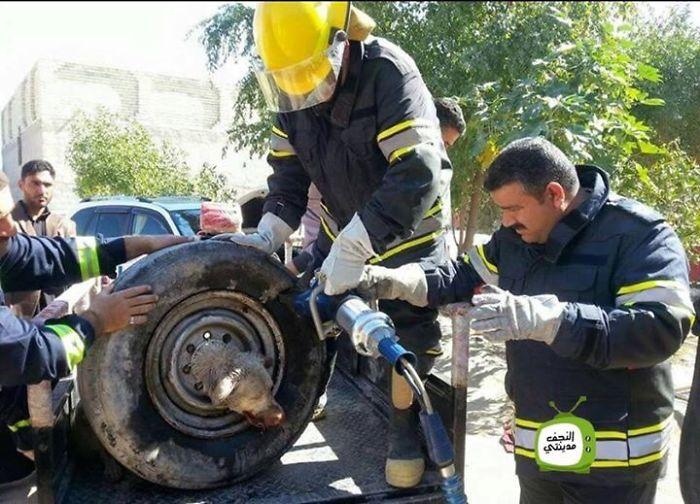 Як в Іраку рятували собаку, який застряг в колесі  - фото 1