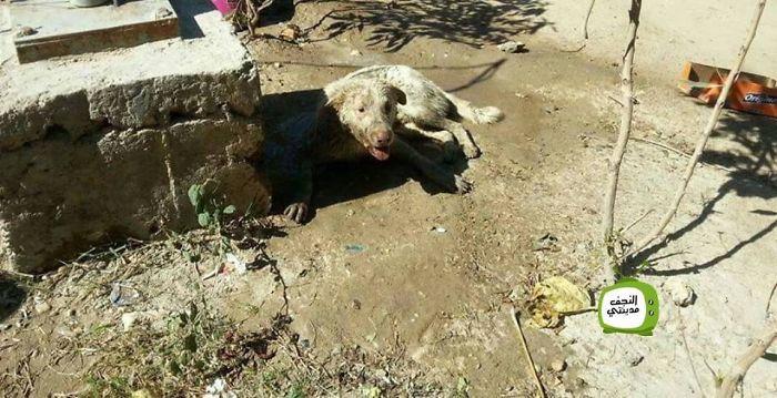 Як в Іраку рятували собаку, який застряг в колесі  - фото 4