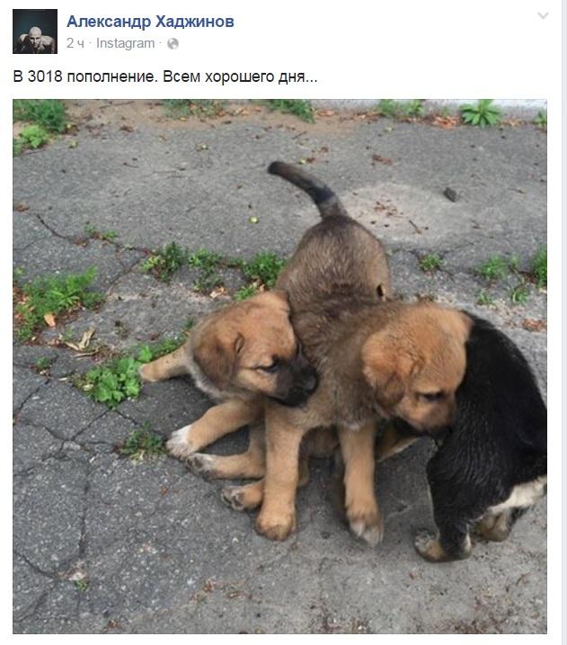 Чим займаються на Донбасі найкращі друзі бійців АТО-5 - фото 3