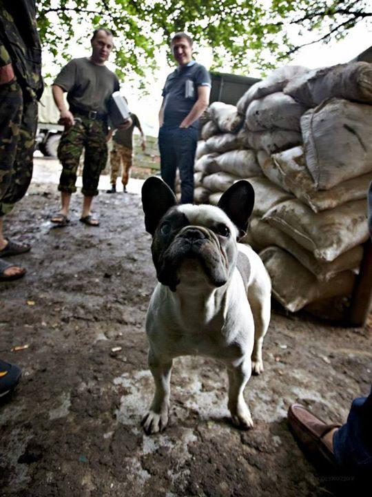 Чим займаються на Донбасі найкращі друзі бійців АТО - 7 - фото 9
