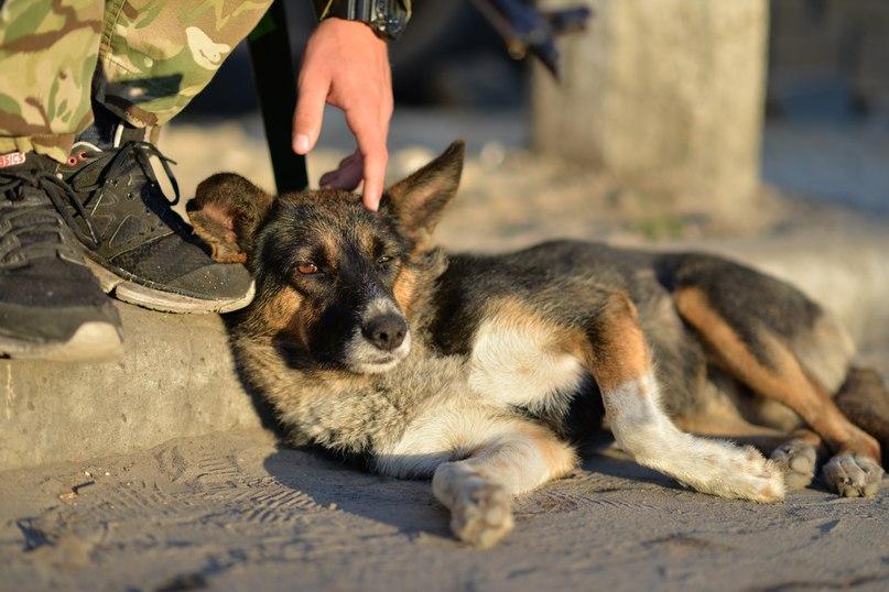 Чим займаються на Донбасі найкращі друзі бійців АТО - 2 - фото 16