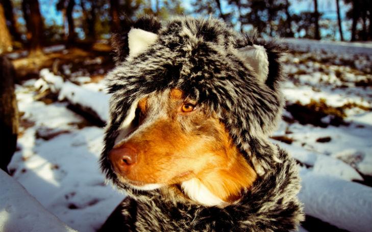 Холод собачий: ТОП-20 собак у зимовому одязі - фото 1