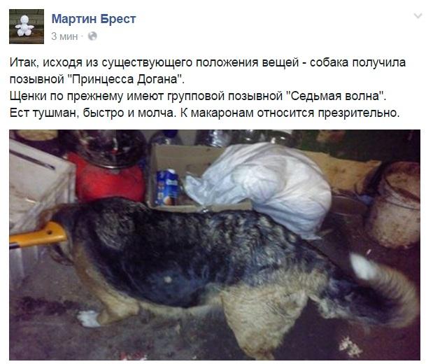 За що собакам в АТО треба поставити пам'ятник - фото 9
