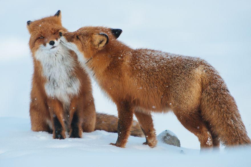 Як тварини доводять, що поцілунки потрібні не тільки людям - фото 10