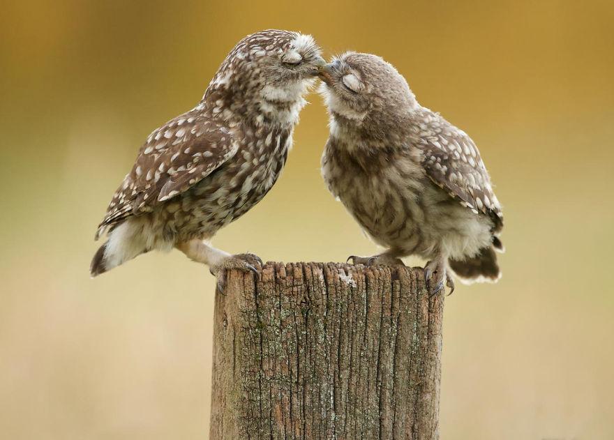 Як тварини доводять, що поцілунки потрібні не тільки людям - фото 9