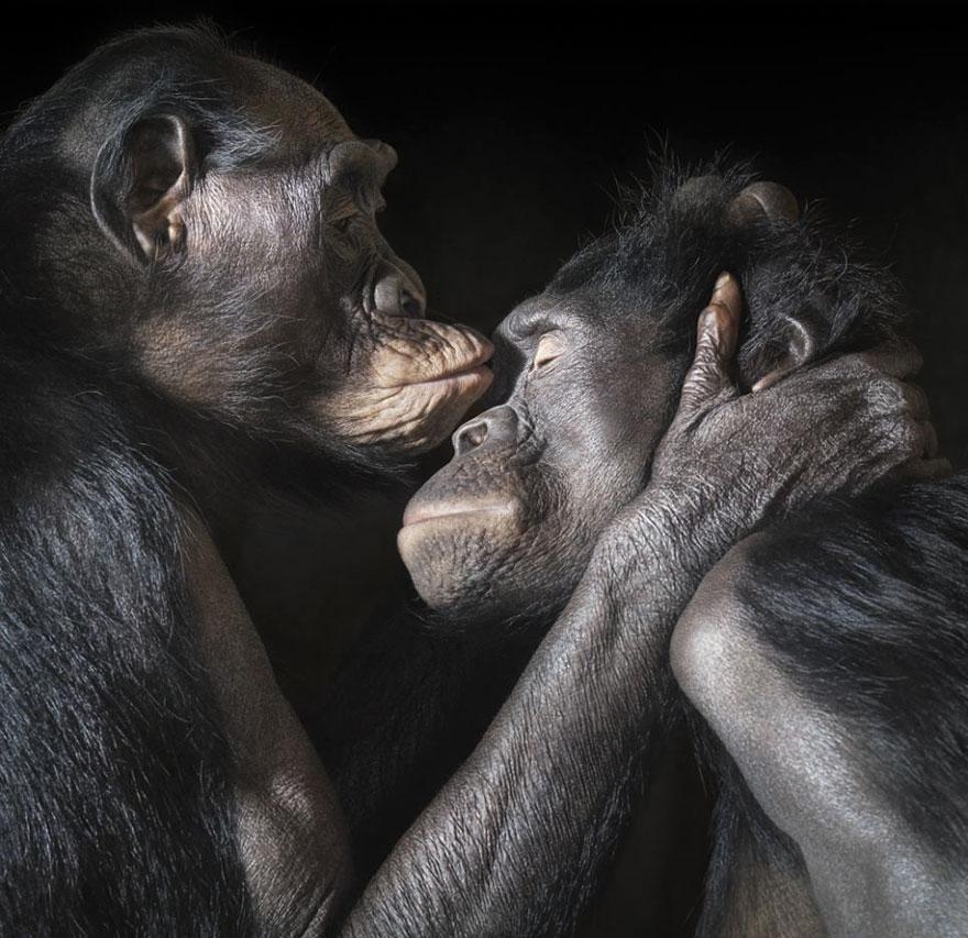 Як тварини доводять, що поцілунки потрібні не тільки людям - фото 8