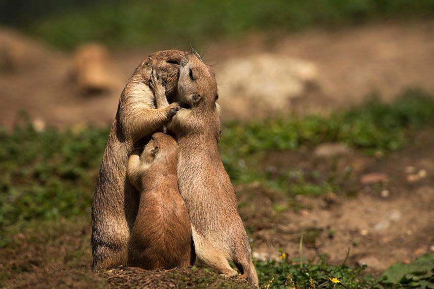 Як тварини доводять, що поцілунки потрібні не тільки людям - фото 7