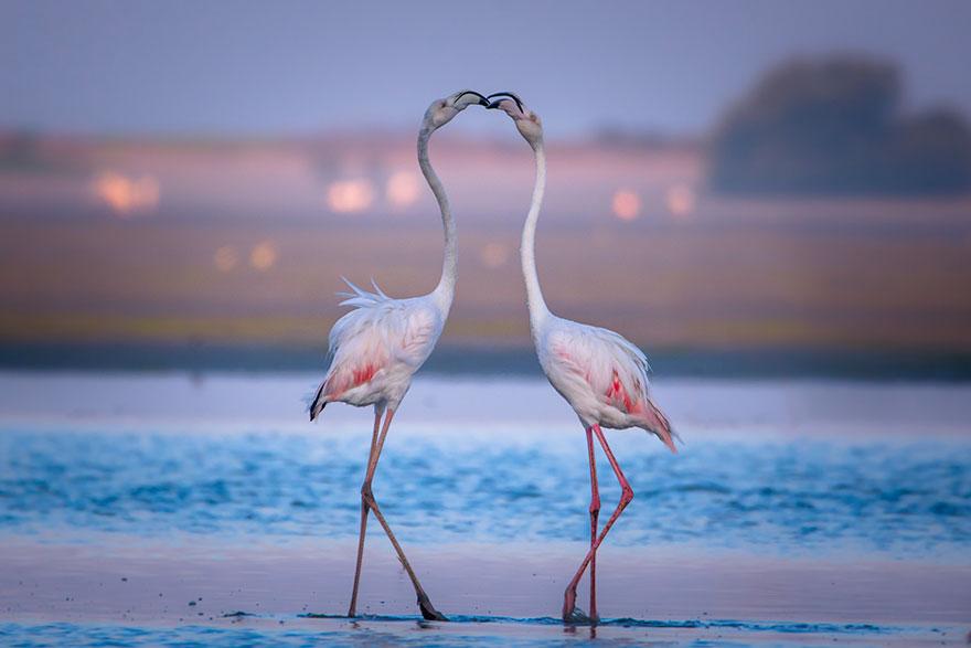 Як тварини доводять, що поцілунки потрібні не тільки людям - фото 3