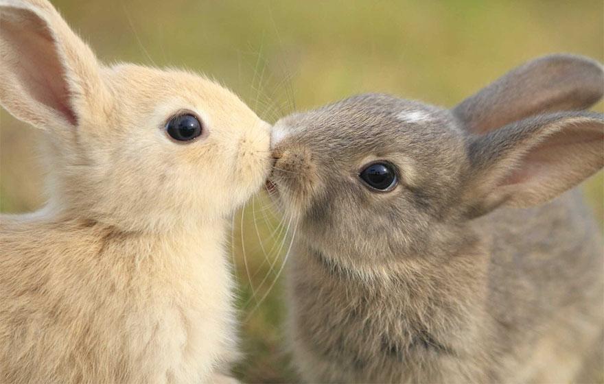 Як тварини доводять, що поцілунки потрібні не тільки людям - фото 1