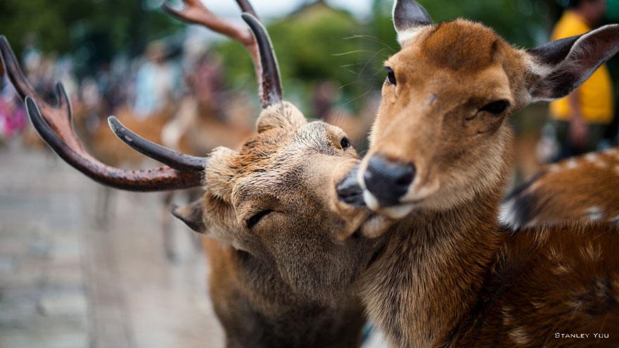 Як тварини доводять, що поцілунки потрібні не тільки людям - фото 5