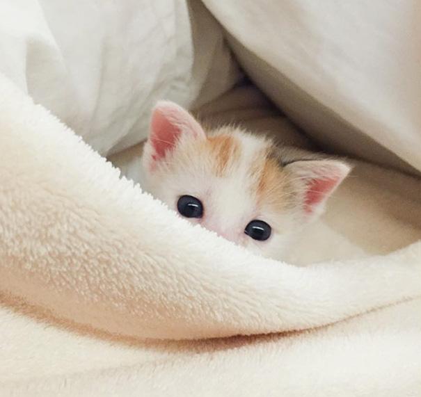 ТОП-7 зворушливих кошенят з яскравими емоціями - фото 7