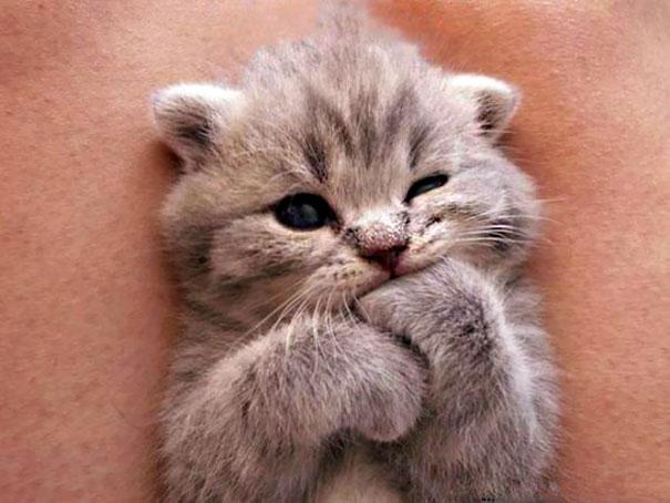 ТОП-7 зворушливих кошенят з яскравими емоціями - фото 4