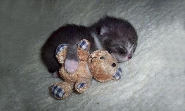 ТОП-7 зворушливих кошенят з яскравими емоціями - фото 3