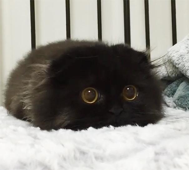 ТОП-7 зворушливих кошенят з яскравими емоціями - фото 2