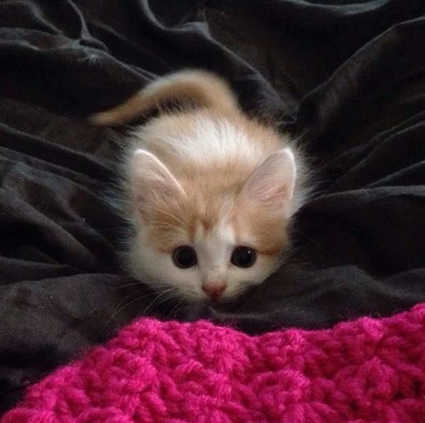 ТОП-7 зворушливих кошенят з яскравими емоціями - фото 5