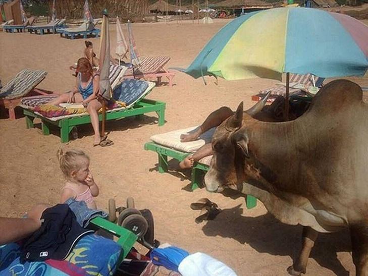 30 дивних і кумедних пляжних фотографій (Частина 2) - фото 19