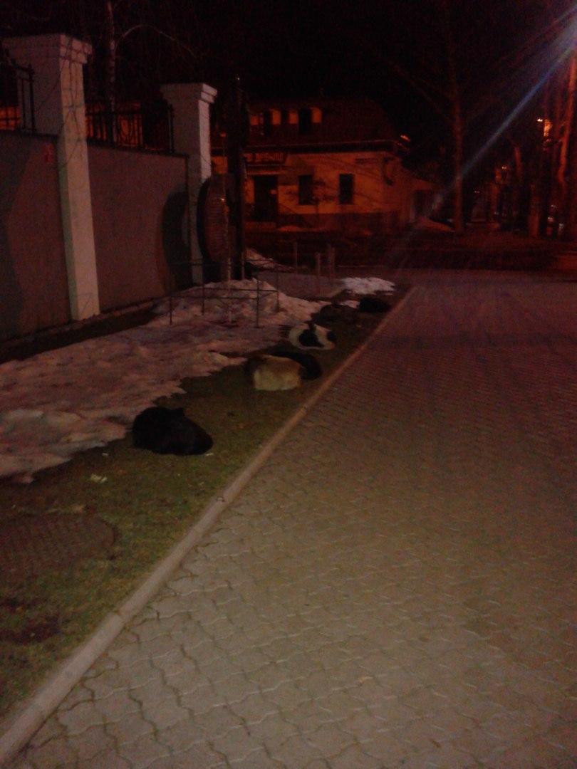 Куди у Миколаєві краще не потикатись, щоб не стати обідом для собак - фото 11