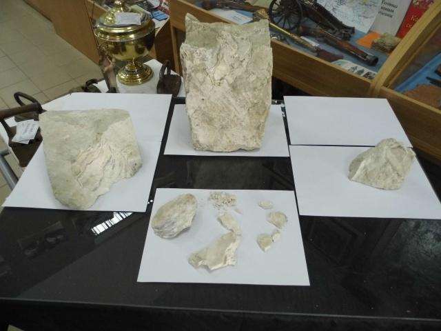 На Миколаївщині в музеї з'явилась раковина величезного молюска віком 70 млн років - фото 2