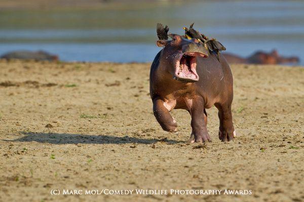 Картинки по запросу тварини кумедні