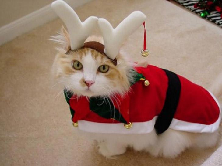 ТОП ідіотських новорічних костюмів - фото 24
