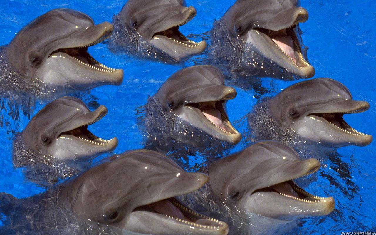 ТОП-20 кумедних та моторошних випадків з китами та делфінами - фото 11