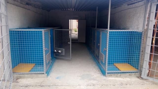 На Миколаївщині запускають ще один притулок для бродячих тварин - фото 1