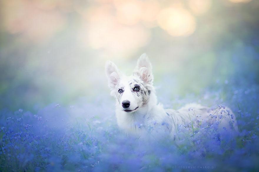 ТОП-5 світлин собак, які люблять мріяти - фото 5