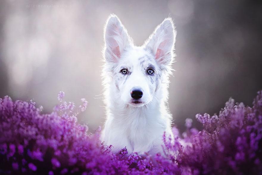 ТОП-5 світлин собак, які люблять мріяти - фото 4