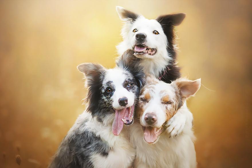 ТОП-5 світлин собак, які люблять мріяти - фото 2