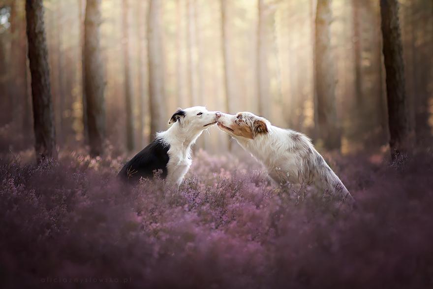 ТОП-5 світлин собак, які люблять мріяти - фото 1