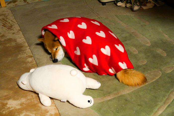 Як зворушливо спить милий песик із своїм плюшевим двійником  - фото 6